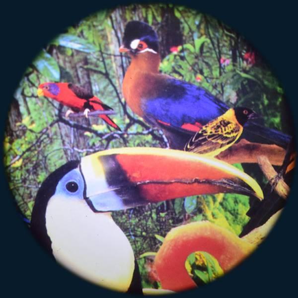 Solar effekthjul tropiske fugler push on